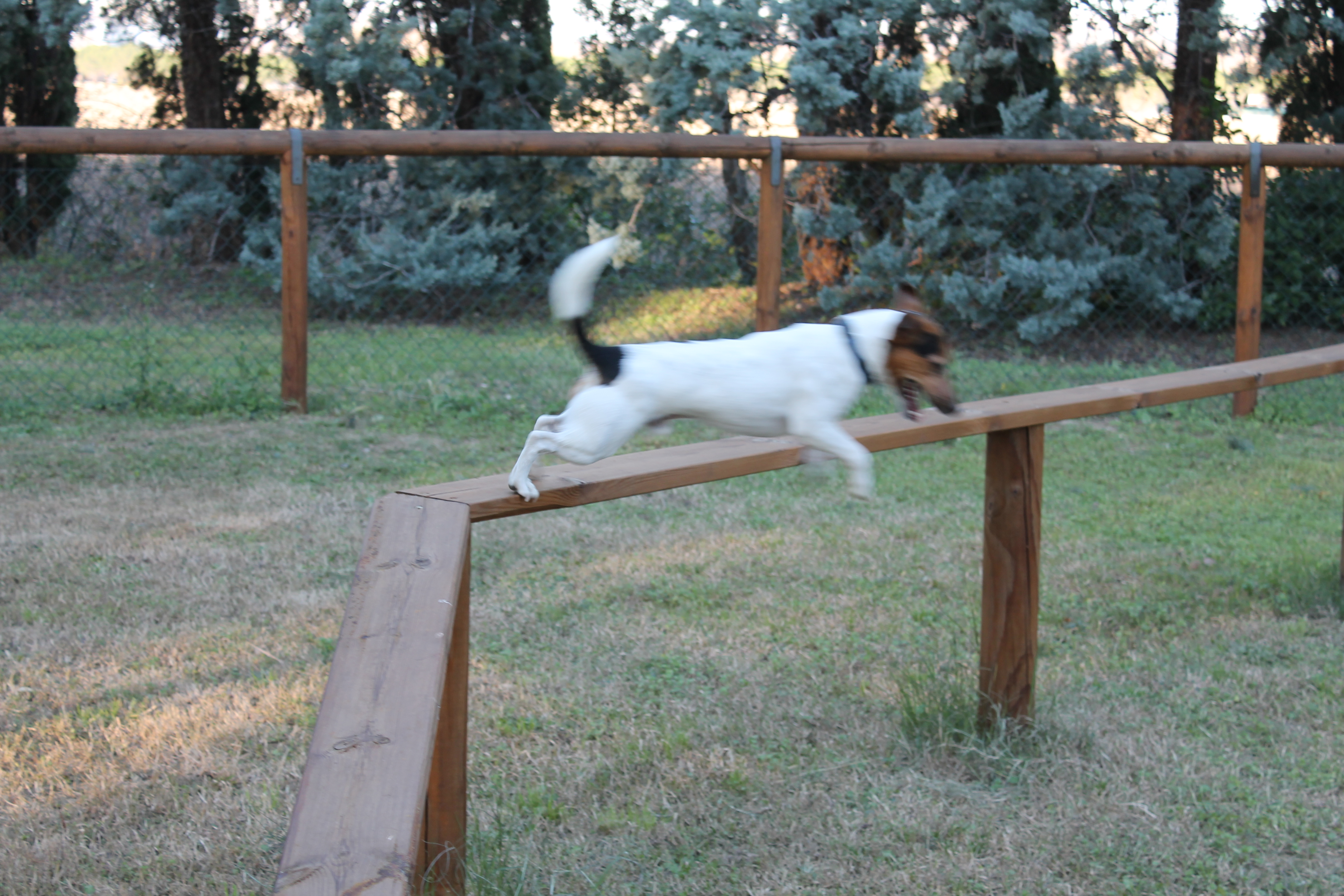 Camping qui accepte les chien camping ardeche