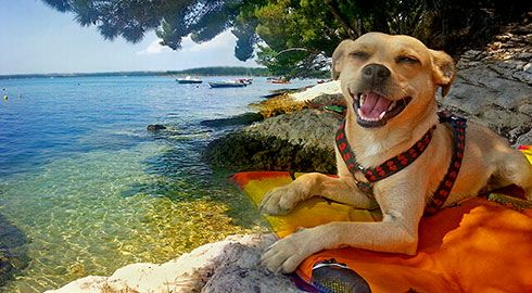 Vacance camping avec son chien